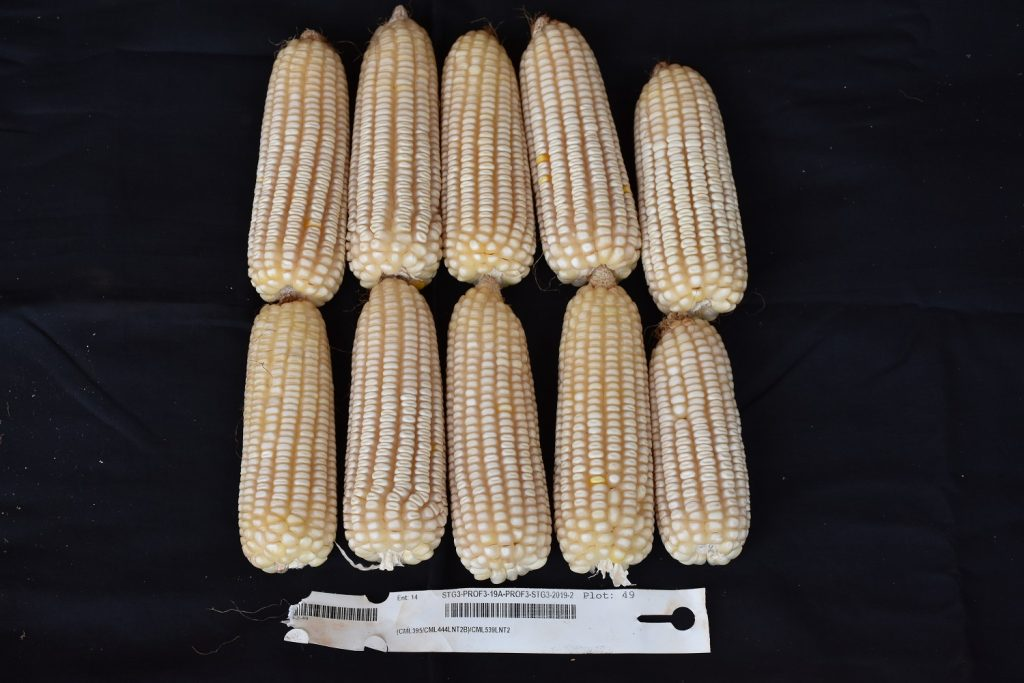 a good low N maize hybrid