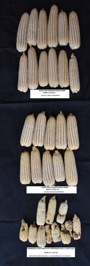 Comparison between maize that respond well to low N and commercial check