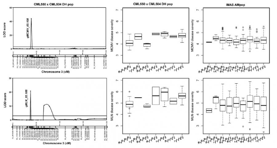 Genetic architecture of maize chlorotic mottle virus and maize lethal necrosis through GWAS, linkage analysis and genomic prediction in tropical maize germplasm