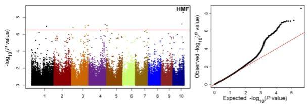 Genome-wide association study to identify genomic regions influencing spontaneous fertility in maize haploids