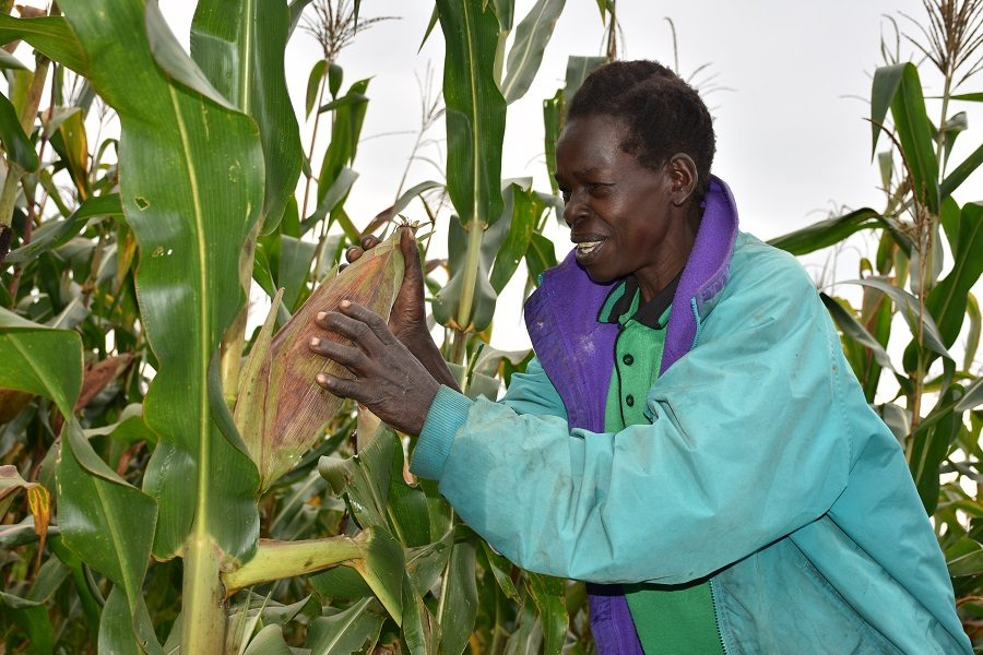 Equator Seeds Case study