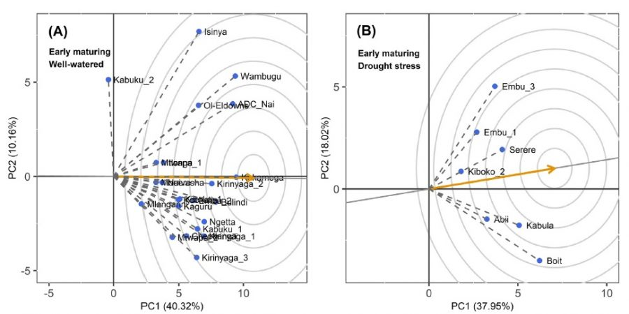 Performance and yield stability of maize hybrids in stress-prone environments in eastern Africa